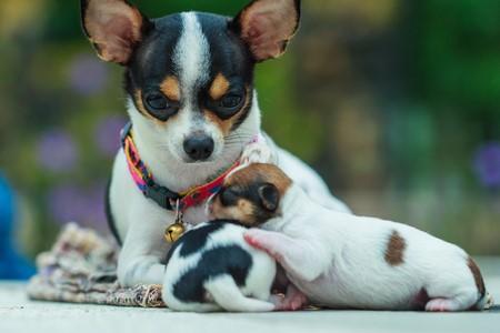 Покупка щенка в питомнике или с рук